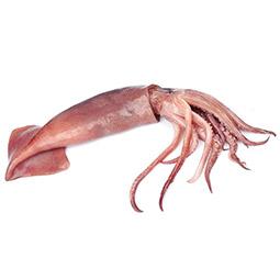 Chipirón sucio patagonico (Calamar)