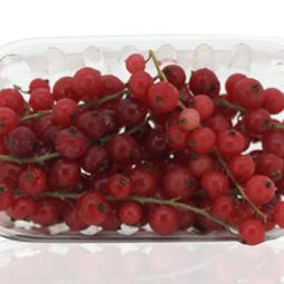 Grosellas rojas en rama