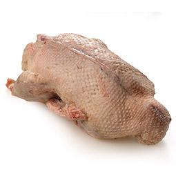 Pato azulón 2Uds
